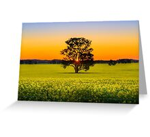 Canola Sunset Greeting Card
