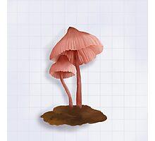 Mushroom Study Photographic Print