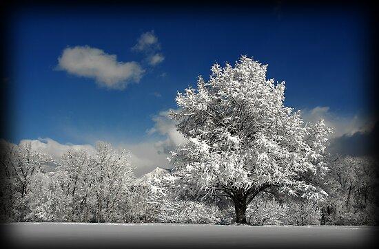 Winter Wonderland by Ryan Houston