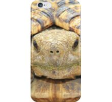 Tortoise Stare - Serious Intimidation of Fun iPhone Case/Skin
