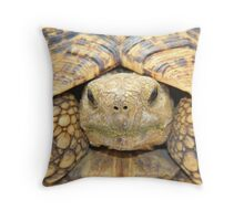 Tortoise Stare - Serious Intimidation of Fun Throw Pillow
