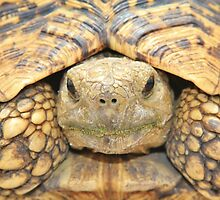 Tortoise Stare - Serious Intimidation of Fun by LivingWild