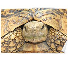 Tortoise Stare - Serious Intimidation of Fun Poster