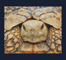 Tortoise Stare - Serious Intimidation of Fun One Piece - Short Sleeve