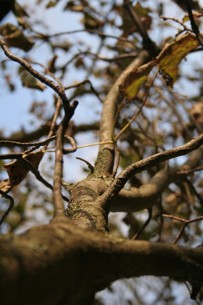 A Branch in Autumn by Lewis Packman