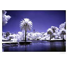 Botanical Gardens - Melbourne Photographic Print