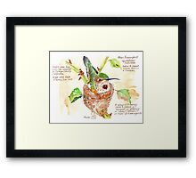Phoebe, the Allen's Hummingbird Framed Print