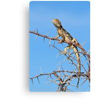 Spiny Agama - Lizard Blues of Fun Canvas Print
