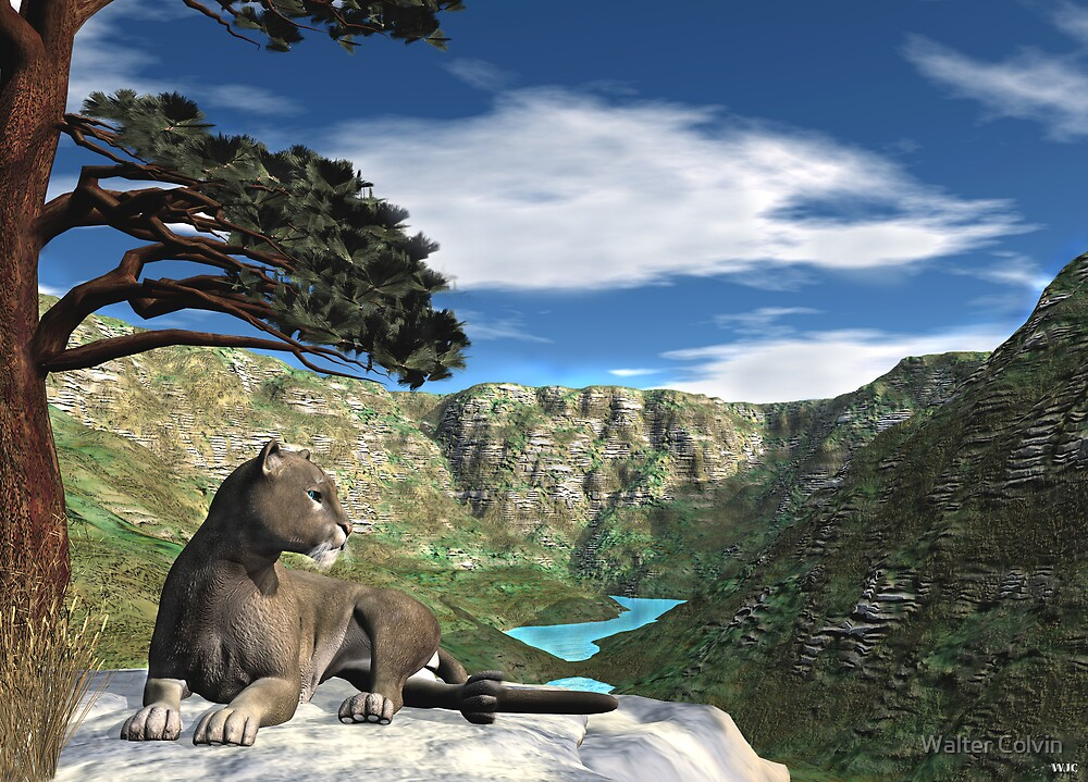 Cougar Canyon by Walter Colvin