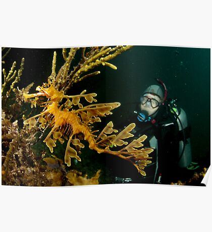 Leafy Seadragon and diver Poster