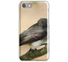 grey fantail  - at Brickenden (Tasmania) iPhone Case/Skin