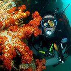 Soft corals on ex Hmas Brisbane by Deb Aston