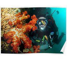 Soft corals on ex Hmas Brisbane Poster
