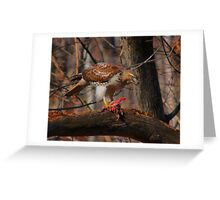 Red-Tailed Hawk with prey  Greeting Card