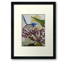 Blue Wren on Gum Nuts  (Sold) Framed Print