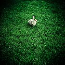 Rabbit by Mohammed Al-Ibrahim
