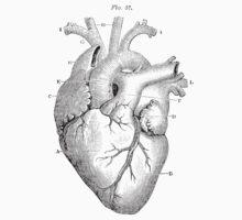 Anatomical Heart by PharisaicalJesu
