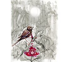 the Nightingale and the Rose 4 Photographic Print