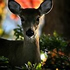 Wide Eyes by Rock Mollica