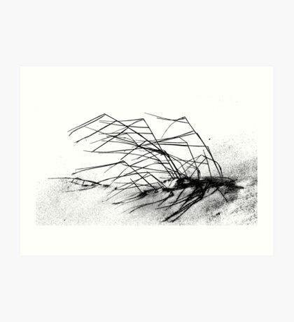 Winter Dune Grass Art Print