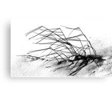 Winter Dune Grass Canvas Print