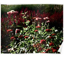 Diffused Garden Poster