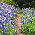 Blue Bonnets  Pathway (Texas) by Jamaboop