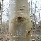 The eye of the forest by Chris  Munday