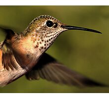 Hummer Profile in Flight Photographic Print