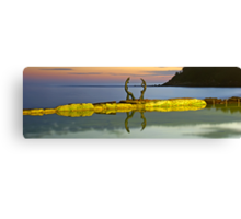 Cabbage Tree Bay Canvas Print