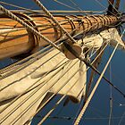 Up the Mast by Sandy  McClearn