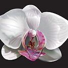 Orchid by Richard  Canington