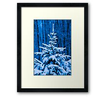 Snow covered Christmas tree Framed Print