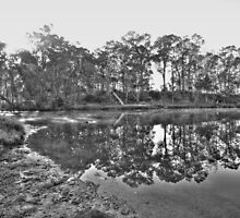 Blackwood Reflections #8 by Elaine Teague