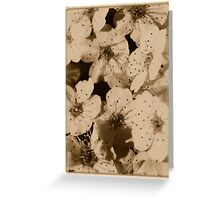 White Azalea Card Greeting Card