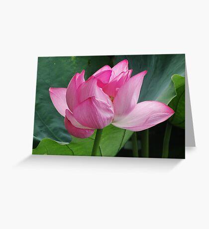 Lotus in Ueno Park Greeting Card
