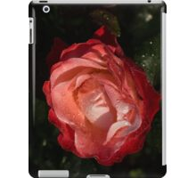 A Wonderful Cream-and-Red Rose With Dewdrops iPad Case/Skin