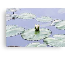 Brightly Colored Water Lily or Lotus Flower Floating on Pond Canvas Print