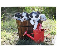 Bucket full of cuteness. Poster