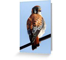 Sparrow Hawk Greeting Card