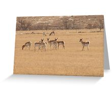Prong Horns Enjoying the Day Greeting Card