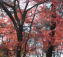 red autumn in Korea by rani