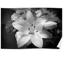White lily flower Poster