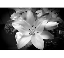 White lily flower Photographic Print