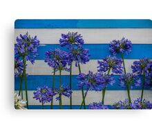 Agapanthus Blue Stripe Canvas Print
