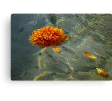 Liquid Rainbows – Floating Chrysanthemum Blossom in the Sunshine Canvas Print