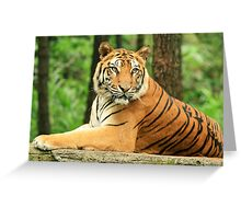 A Strong Java Tiger Greeting Card