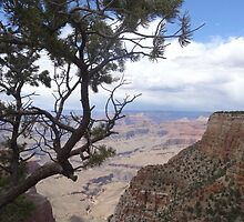 Treeview, Grand Canyon by CanDoNgandu
