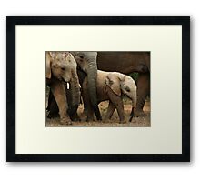 The Baby Of The Herd Framed Print