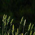 Green as Grass by metriognome